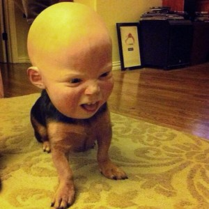 g6mLdogsinmasks-baby-1